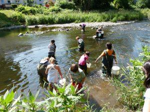 Auswilderung junger Lachse in unserer Sieg