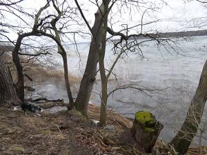 typischer Uferbereich - am Tennesesee