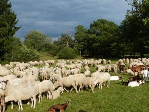 die wandernde Schafherde wird von Hirten + Hund begleitet