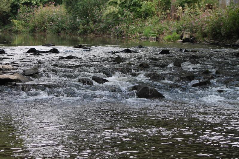 das angrenzende Flußbett der Sieg  - natürlicher  Lebensraum für  Tiere im und am Wasser