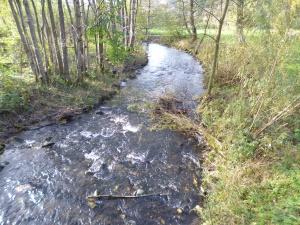 die Bröl - Nebengewässer der Sieg (gute Lachshabitate)