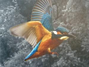 Video über die Vögel in der Siegaue