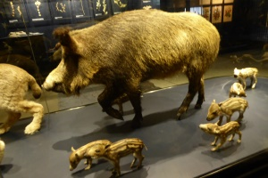 Entwicklung der Tierwelt