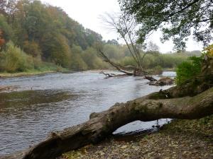 die untere Sieg fließt Richtung Rhein