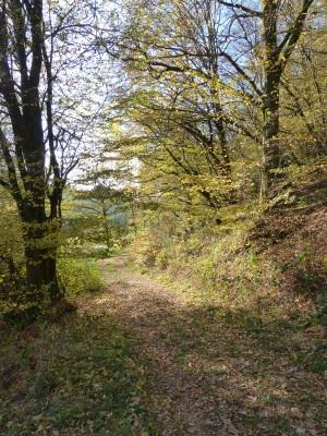 Abschnitt des Wanderweges